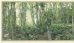 9 AM, summer morning, birch tree forest. colour woodcut 32x75cm 1997. ©siemendijkstra2014.